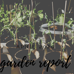 hoping my little plants grow – april garden update