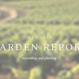 expanding and planting – may garden update