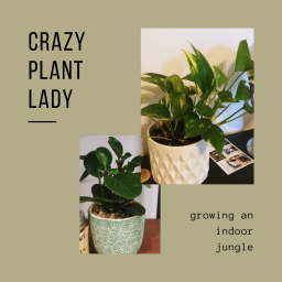 crazy plant lady – growing an indoor jungle