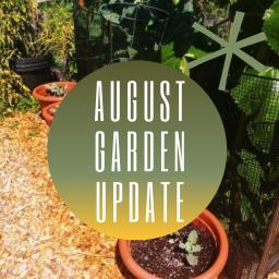 august garden update – preparing for fall
