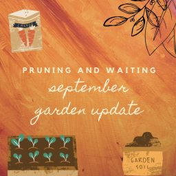 pruning and waiting – september garden update