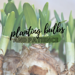 planting bulbs and patience