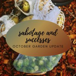 sabotage and successes – october garden update