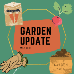may garden update – first harvests and hopes